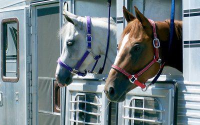 Traslado de caballos en remolque. ¡Consejos!