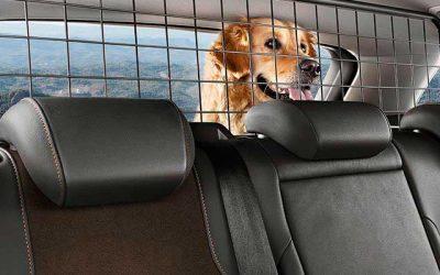Viajar y transporte de mascotas.